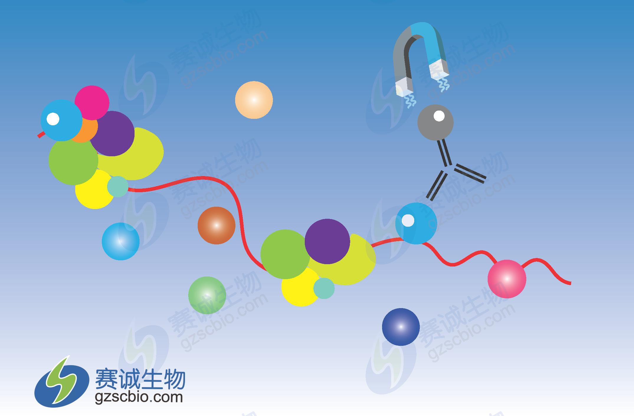 基因克隆步骤及原理