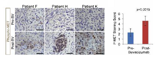 免疫组化图片数据化分析.jpg