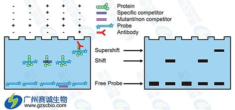 单细胞实验流程设计图