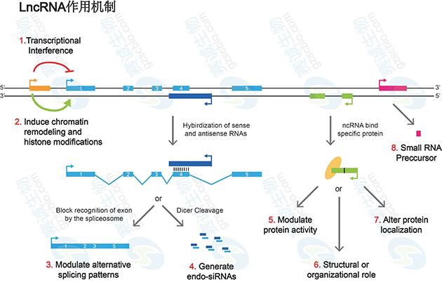 核酸与蛋白质结构和功能的预测分析