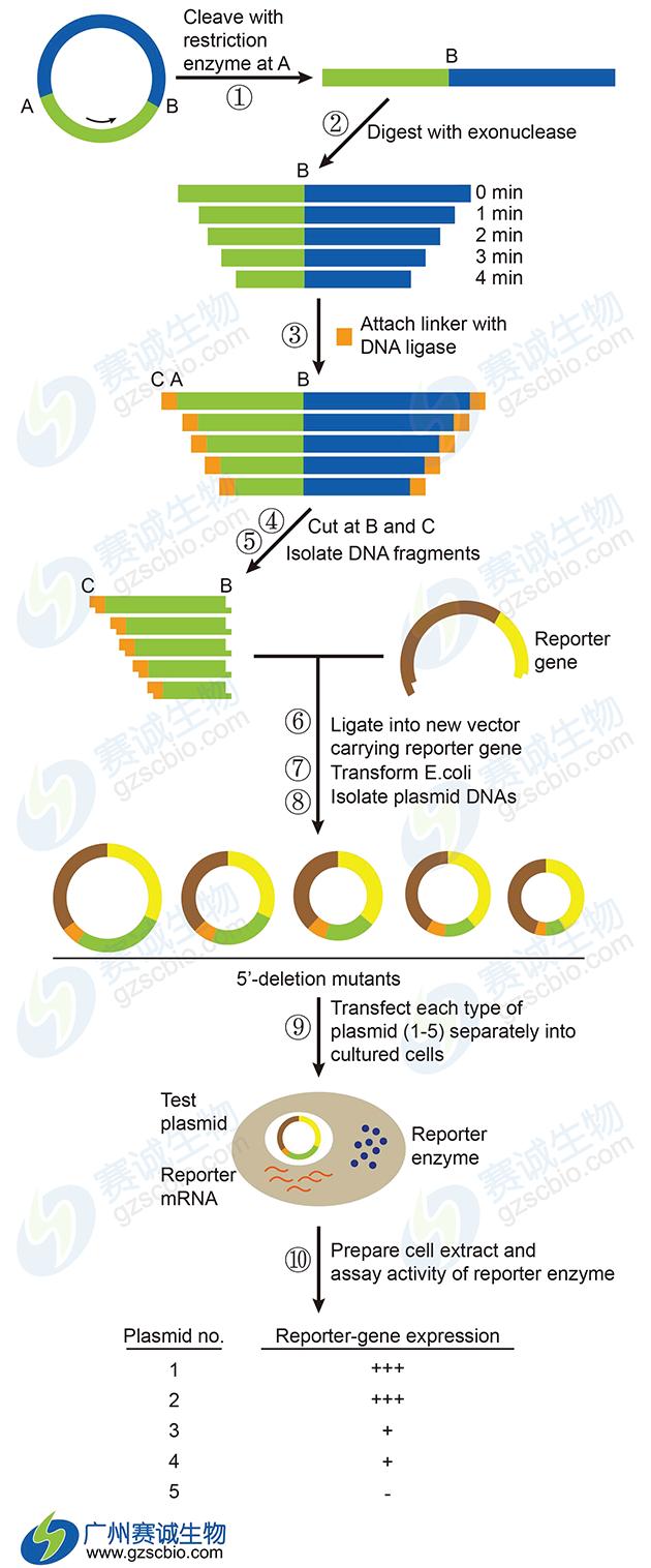 基因表达调控主要实验技术