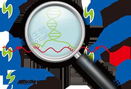 2.1 lncRNA的研究背景及本章题图.png