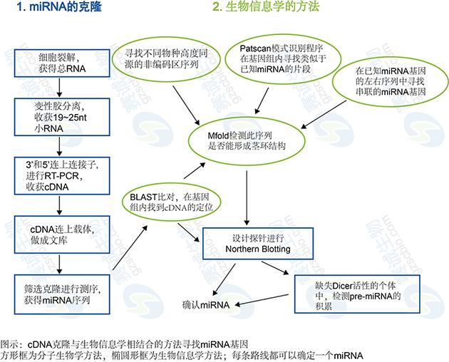生物信息学在miRNA研究中的应用.png