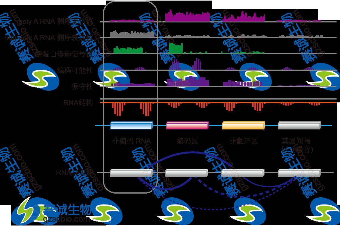 利用数据整合对lncRNA进行鉴定.png